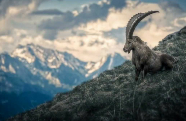 Capricorn New Moon – The Goat Within – 10th January 2016